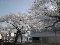竹内英樹 公式ブログ/昨日の桜 画像3
