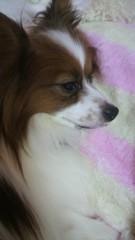 大島麻衣 公式ブログ/かわゆぅ 画像1