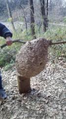 くまいもとこ 公式ブログ/スズメバチの巣 画像1