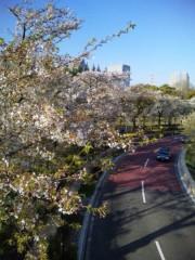 川越塔子 公式ブログ/梅は咲いたが桜はまだかいな 画像1