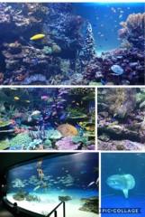 高野早苗 公式ブログ/サンシャイン水族館� 画像3