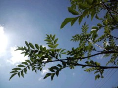 内田量子 公式ブログ/青空 画像1
