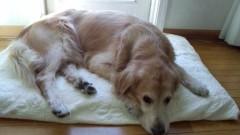 大野裕 公式ブログ/散歩好きな犬です 画像1