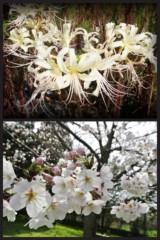 神野菜摘 公式ブログ/お久しぶりです(●U+2070U+C6AU+2070●) 画像2