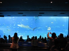 SAYUKI 公式ブログ/美ら海水族館 画像2
