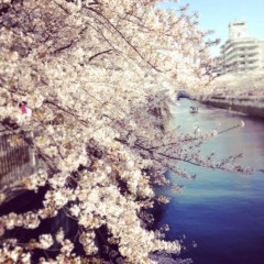 SAYUKI 公式ブログ/桜とレコーディング 画像1