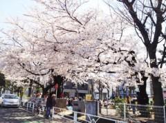 SAYUKI 公式ブログ/お花見! 画像1