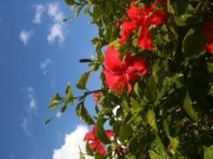 SAYUKI 公式ブログ/Flowers 1 画像1