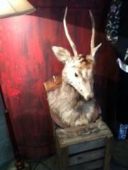 黒崎 翔晴 公式ブログ/【 鹿  】 画像1