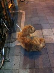 進藤学 公式ブログ/ とりあえず待ち犬シリーズですよ… 画像1