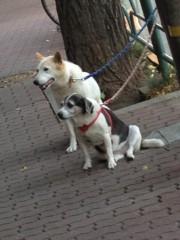 進藤学 公式ブログ/待ち犬シリーズ… 画像1