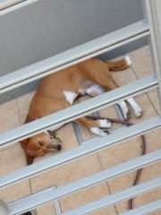 進藤学 公式ブログ/暑い眠い… 画像1