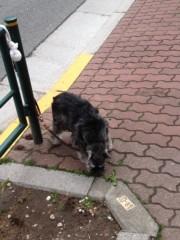 進藤学 公式ブログ/待ち犬シリーズ… 画像3
