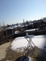 進藤学 公式ブログ/雪が積もるとやってくる… 画像1