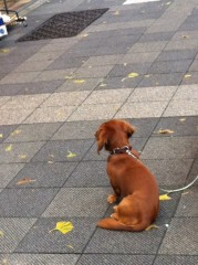 進藤学 公式ブログ/待ち犬シリーズです… 画像1