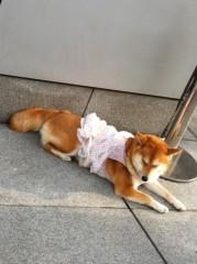 進藤学 公式ブログ/カワユい。。 画像1