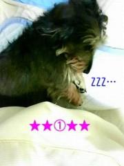 笹田道子 公式ブログ/☆たぬき犬寝入り☆ 画像1