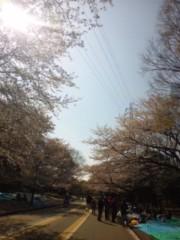 笹田道子 公式ブログ/☆桜舞☆ 画像1