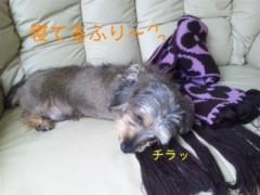 笹田道子 公式ブログ/☆たぬきいぬ寝入り☆ 画像3