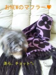 笹田道子 公式ブログ/☆たぬきいぬ寝入り☆ 画像1