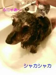 笹田道子 公式ブログ/☆飼い主=飼い犬?☆ 画像2