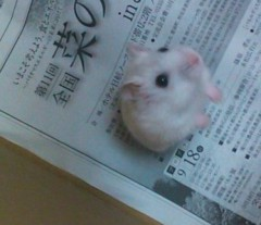 実香子 プライベート画像/日記用 111001_1036~03