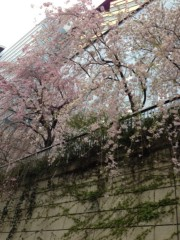 野崎史湖 公式ブログ/目黒川クルーズ 画像3