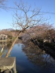 KICO 公式ブログ/鶴岡八幡宮。 画像2