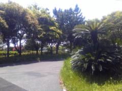 TERUJi / テルジヨシザワ 公式ブログ/EARLY SUMMER ROAD 画像1