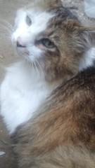 こばんざめ佐藤 公式ブログ/実家の猫 画像1