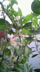 さとう珠緒 公式ブログ/みかんの花 画像1