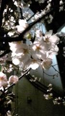 西澤翔吾 公式ブログ/夜桜 画像1