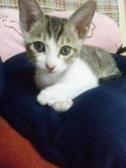 大内厚雄 公式ブログ/子猫 画像1