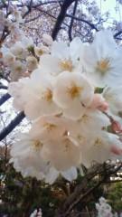 秋本奈緒美 公式ブログ/さくらのころ 画像1