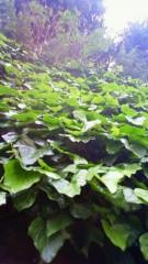 秋本奈緒美 公式ブログ/緑の日 画像1
