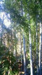 秋本奈緒美 公式ブログ/窓の外の竹林 画像1
