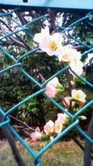 秋本奈緒美 公式ブログ/春が 画像1