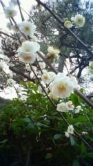 秋本奈緒美 公式ブログ/ここにきていたのね 画像1