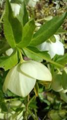 秋本奈緒美 公式ブログ/春の彩 画像1