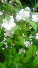 秋本奈緒美 公式ブログ/透明な光 画像1