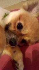 秋本奈緒美 公式ブログ/おはようございます。 画像1