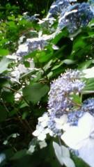 秋本奈緒美 公式ブログ/紫陽花の頃 画像1