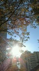 秋本奈緒美 公式ブログ/都会の秋 画像1