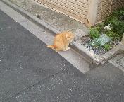 猫ちゃんー!