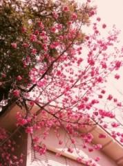 石井春花 公式ブログ/希望の言葉 画像1