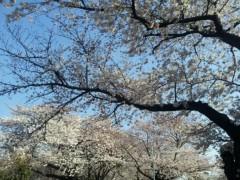 石井春花 公式ブログ/お花見♪ 画像1