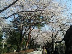 石井春花 公式ブログ/お花見♪ 画像3