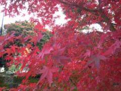 石井春花 公式ブログ/紅葉狩り♪ 画像1