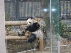 相沢樹々 公式ブログ/パンダ!! 画像2