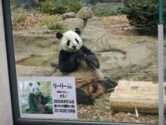 相沢樹々 公式ブログ/パンダ!! 画像1